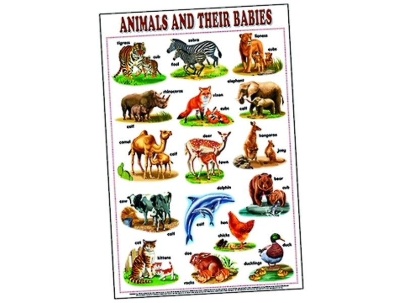 buy this animal their babies chart at our charts posters online