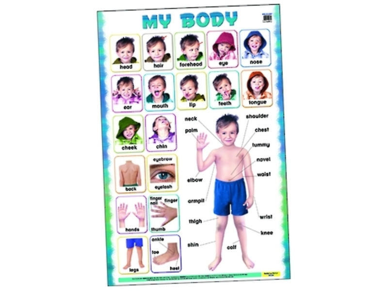 Buy This My Body Chart At Our Charts Posters Online Toy Shop